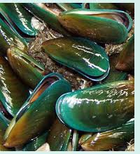 Green-Lipped Mussel Powder - 4330 Image