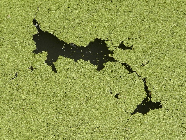 DHA Oil 35% from Algae - 2820 Image