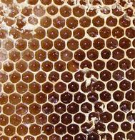 Royal Jelly 3:1 P.E., 6% HDA - 6460 Image